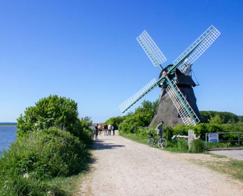 Geltinger Birk mit der Mühle Charlotte am Wegesrand