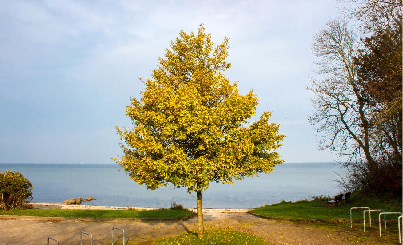 Herbstlicher Baum in Ohrfeldhaff