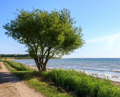 Weg an der Ostsee in Hökholz