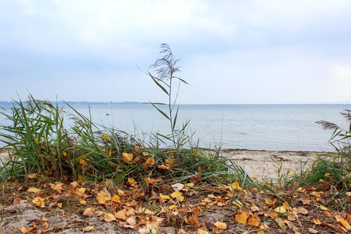 Herbstblätter am Strand in Holnis