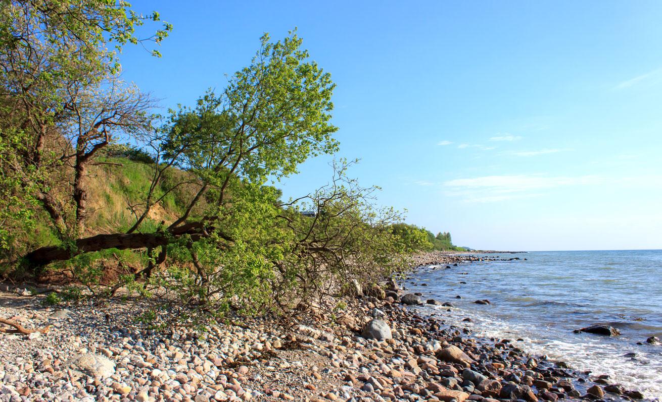 Baum am Strand in Klein Waabs