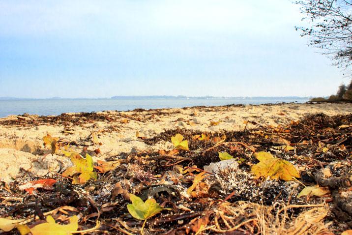 Herbstblätter am Strand in Ohrfeldhaff