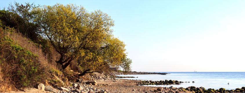 Baum am Strand in Klein Waabs im Frühling
