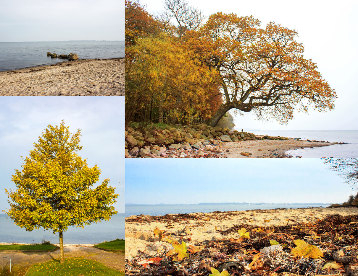 Collage mit vier Fotos - Herbstlich Bäume am Strand in Ohrfeldhaff