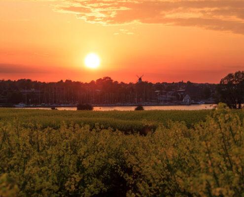 Sonnenuntergang in Kappeln an der Schlei - Im Vordergrund ist ein Rapsfeld zu sehen