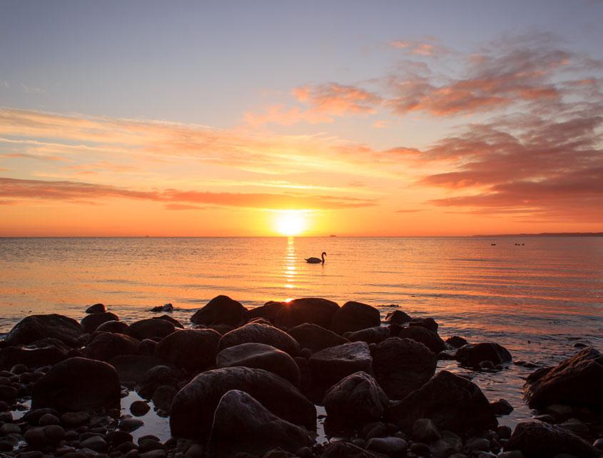 Sonnenaufgang am Fischlegerstrand in Damp - Im Vordergrund sind Steine und auf dem Wasser schwimmt ein Schwan