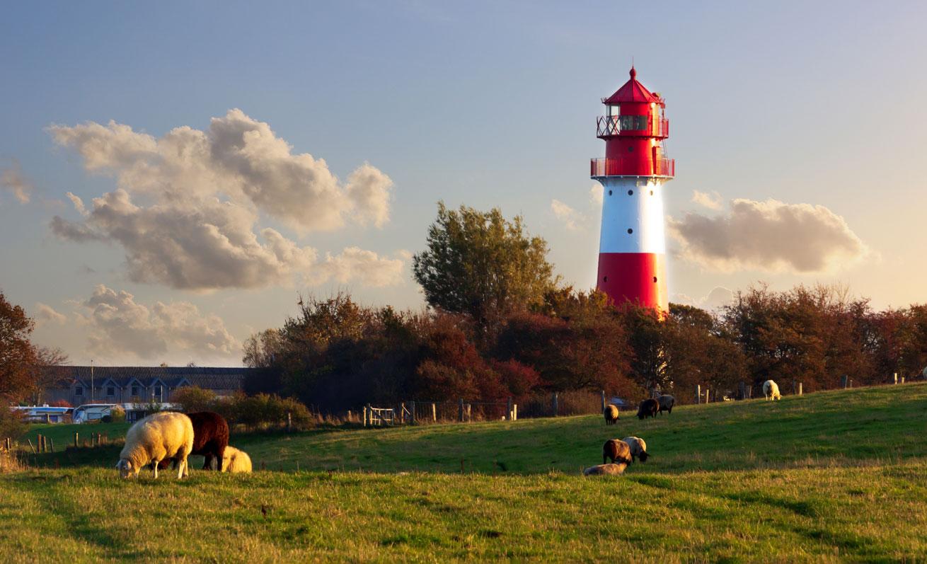 Leuchtturm in Falshöft im Herbst - Vor dem Leuchtturm stehen Schafe