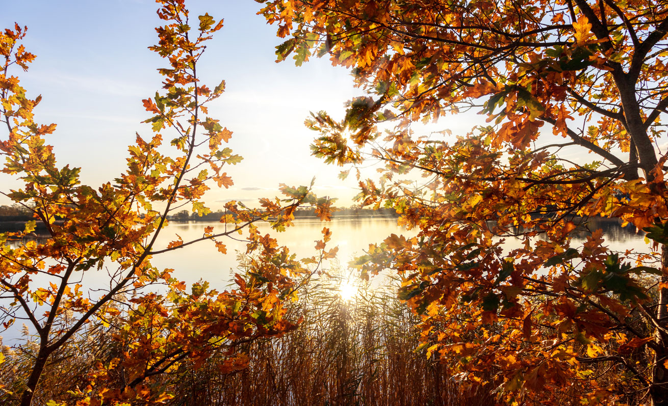 Herbstblätter und Sonnenschein in Lindaunis an der Schlei