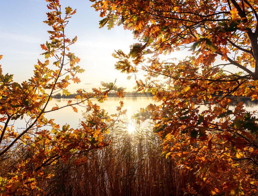 Herbstfarben an der Schlei